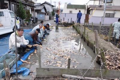201011 試験田レンコン.jpg