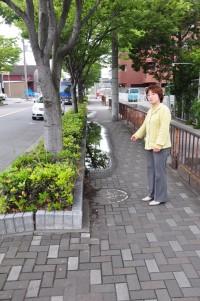 20110527四宮の歩道3.jpg